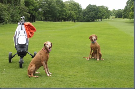 Rusty and Grace on the fairway