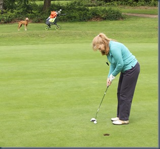 Redhill and Reigate - dog golf review