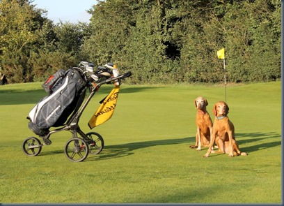 Harpenden Common - dog golf 1