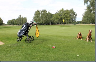 Harpenden Common - dog golf 2