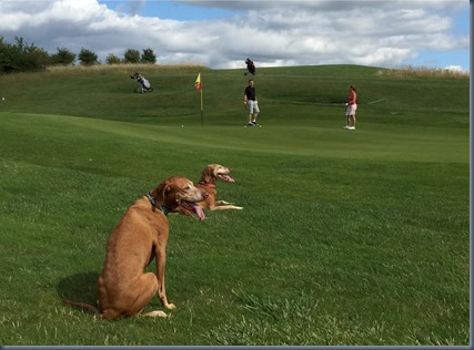 Kirtlington - dog golf 2