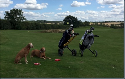 Kirtlington - dog golf