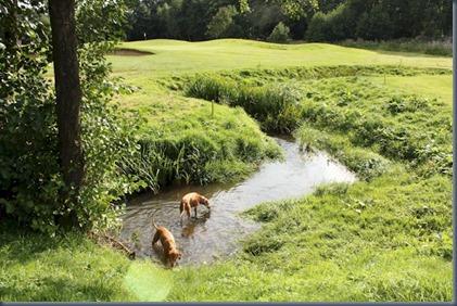 Merrist Wood - stream