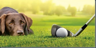 Dog-friendly golfing in the UK