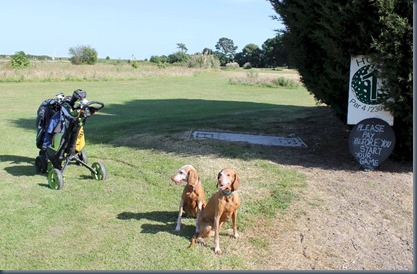 Oak Meadow dog golf 2