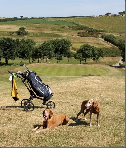 Point at Polzeath dog golf 3