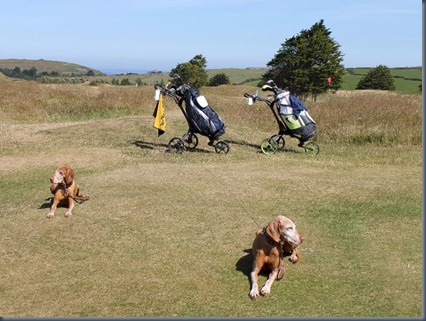 St Enodoc dog golf 1