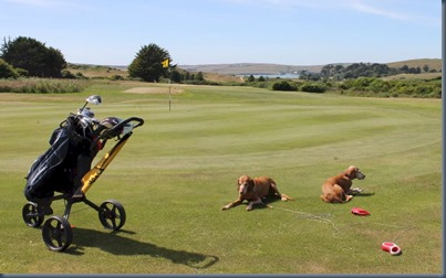 St Enodoc dog golf 3