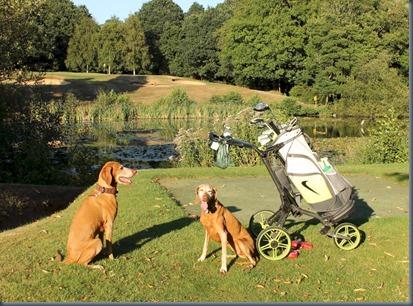 Calcot Park dog golf 1
