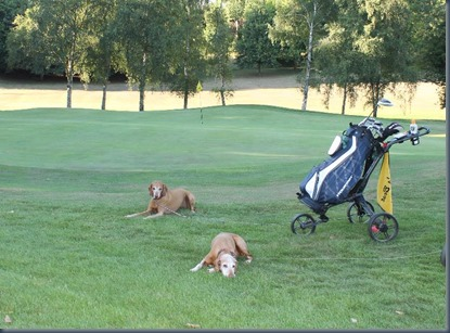 Calcot Park dog golf 2