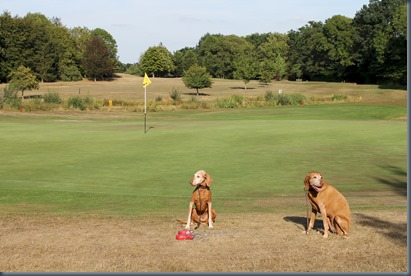 Chobham dog golf 1