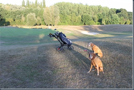 Chobham dog golf 2