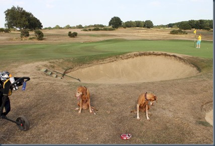 Sandy Lodge dog golf 2
