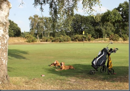 Sandy Lodge dog golf 3