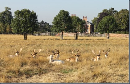 Hampton Court Palace 4