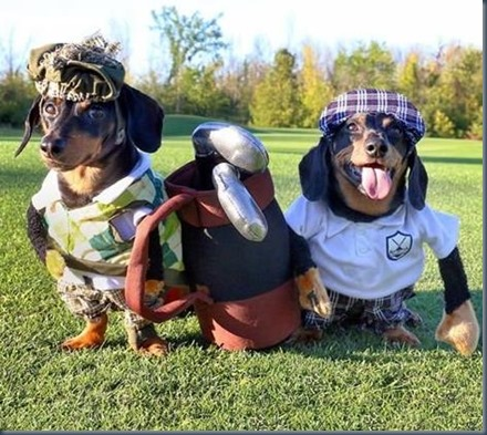 Dog golf costumes