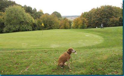 Alton dog golf 4