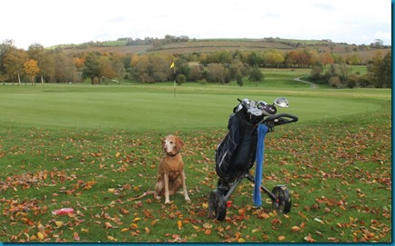 Feldon Valley dog golf 2