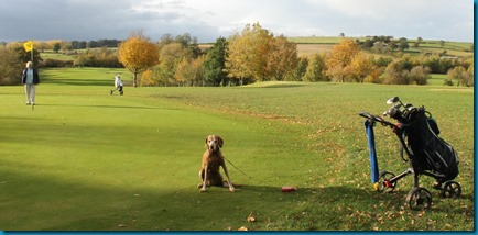 Feldon Valley dog golf 3