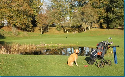 Donnington Valley 3 dog golf
