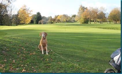 Donnington Valley 4 dog golf