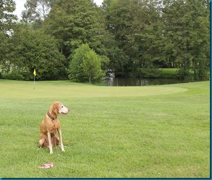 Blacknest dog golf 4