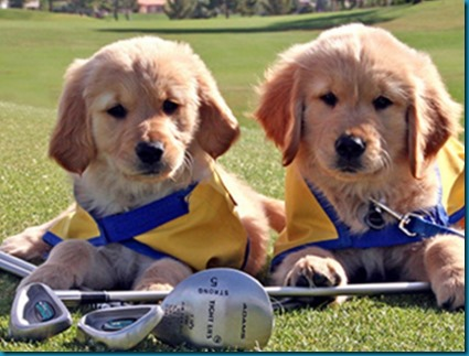 Canine Golf Competitions 1