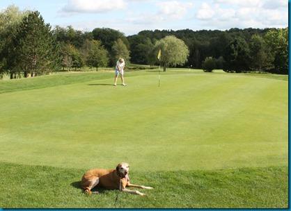 Chiddingfold dog golf 2