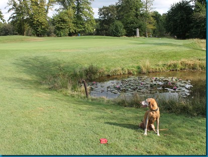 Chiddingfold dog golf 3