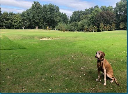 Lodmore dog golf 1