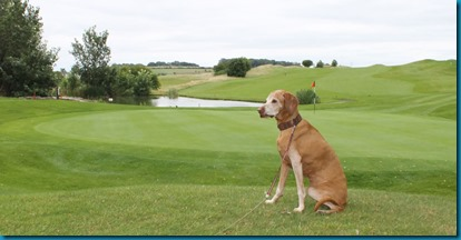 South Winchester dog golf 1