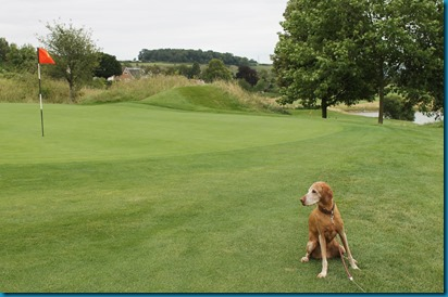 South Winchester dog golf 2