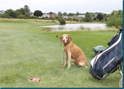South Winchester dog golf 3