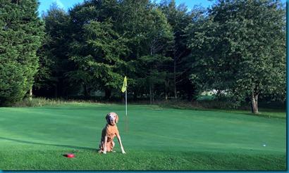 Burford dog golf 2
