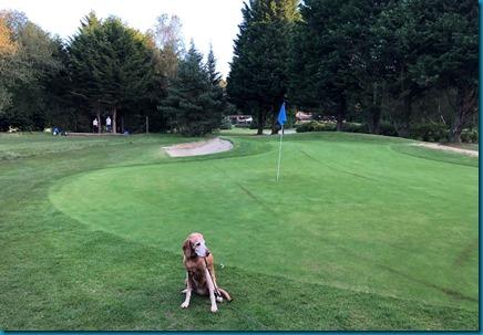Lavender Park dog golf 1
