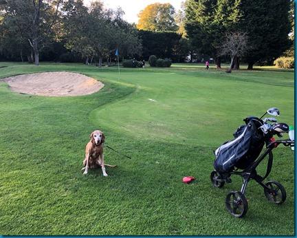 Lavender Park dog golf 2